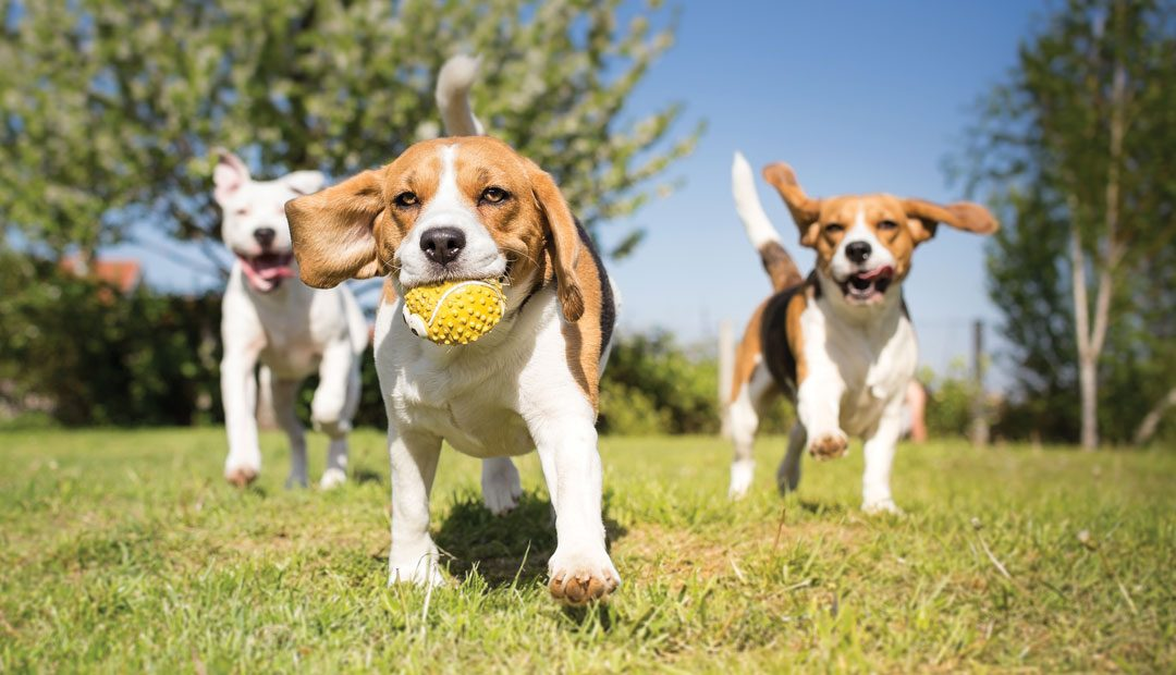Dog Parks in Beaver County