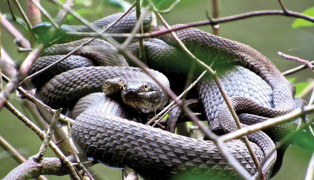 E-E-E-EK! A Snake!