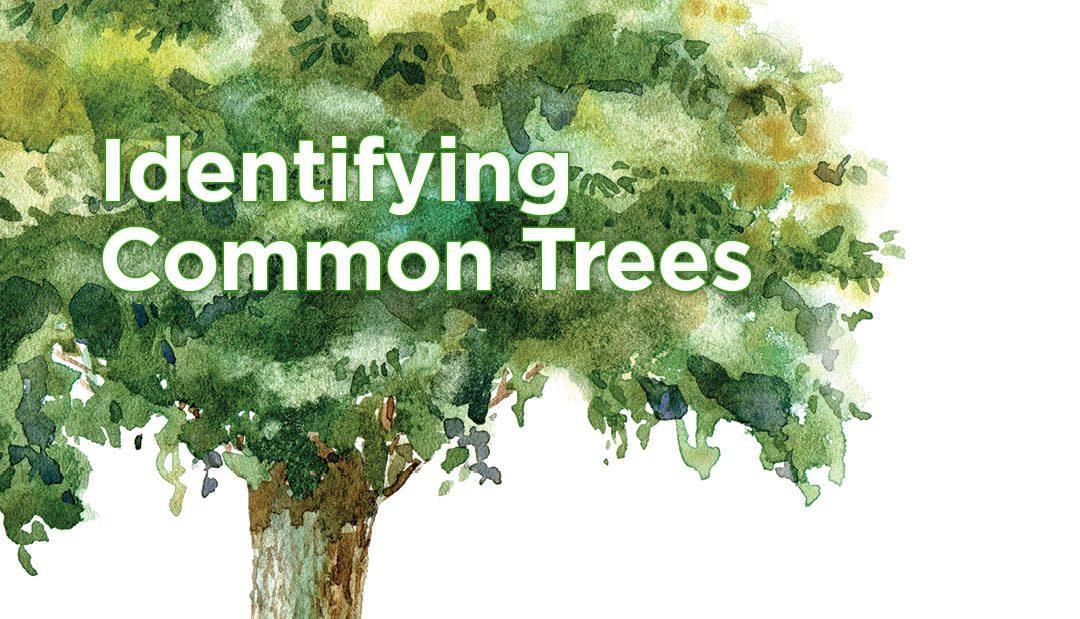 Identifying Common Trees
